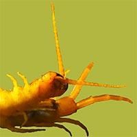 Rhode Island Centipede Control