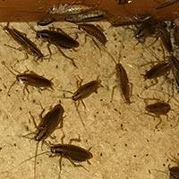 Rhode Island Cockroach Control