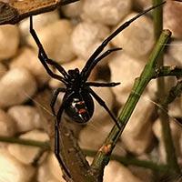 Rhode Island Spider Elimination