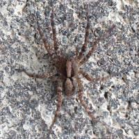 Rhode Island Spider Exterminator