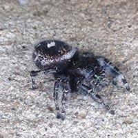 RI Spider Exterminator