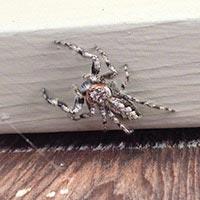 RI Spider Control