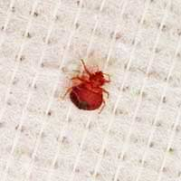 Rhode Island Bed Bug Control Services Ri Bed Bug Exterminator