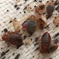 Rhode Island Free Bed Bug Inspection