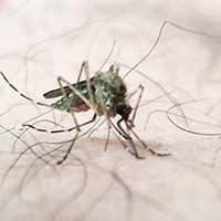 RI Mosquito Control