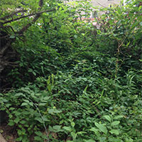 Ticks hiding areas and foliage