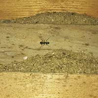 Carpenter Ant Inspection in Rhode Island