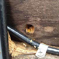 Carpenter Bee Control in RI