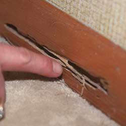Termite Control in RI
