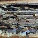 RI Subterranean Termite Control