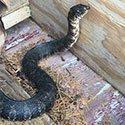 RI Snake Control