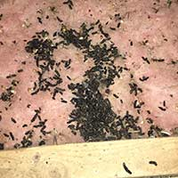 Guano in Attic