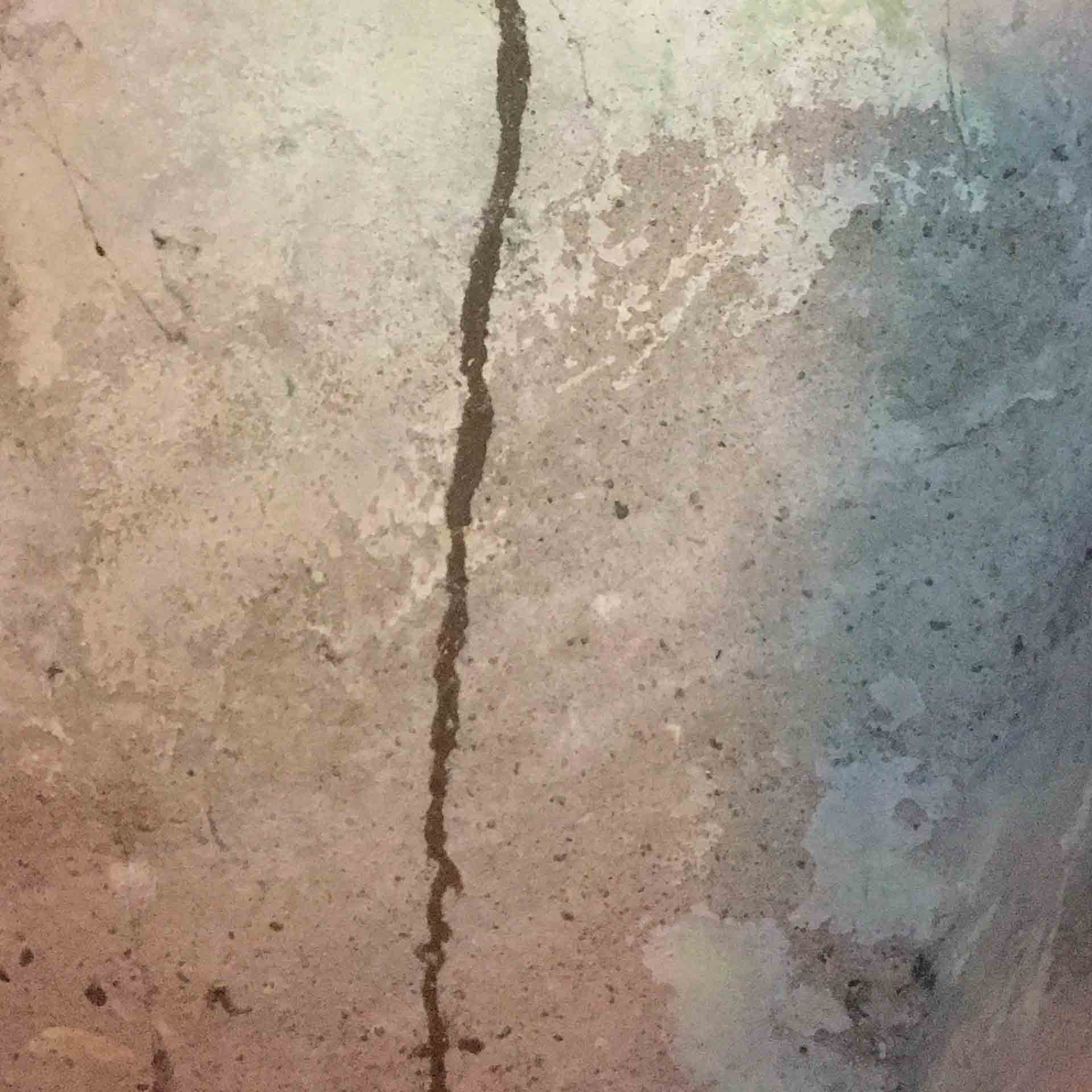 Longs termite mud tube