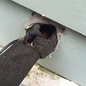 RI Rodent Proofing and Sealing of Mouse Holes
