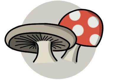 Dodgy looking mushrooms
