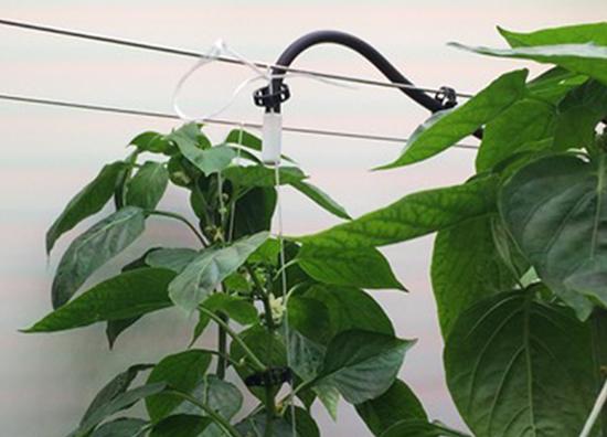 Plant Lighting Case Study