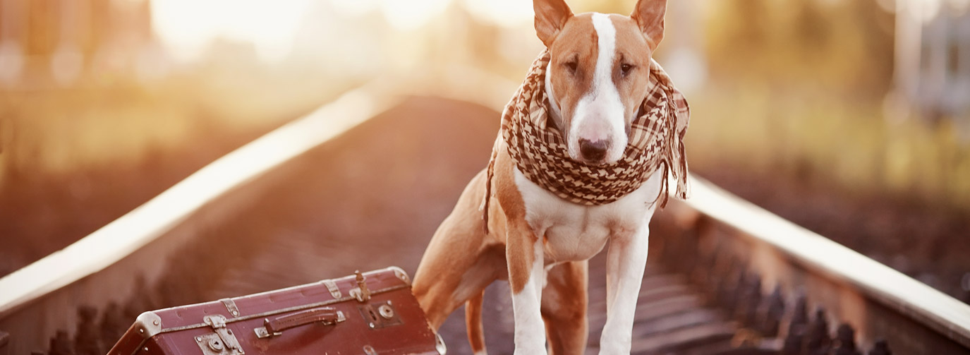 dog with suitcase on railroad tracks looking at camera