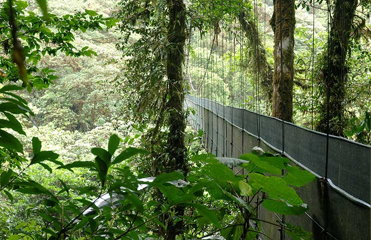 Santa Elena Cloud Forest Natural Reserve