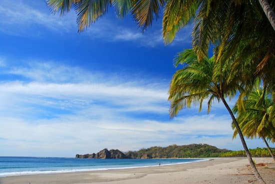 carillo beach in guanacaste with blue sky, golden sand and big palms