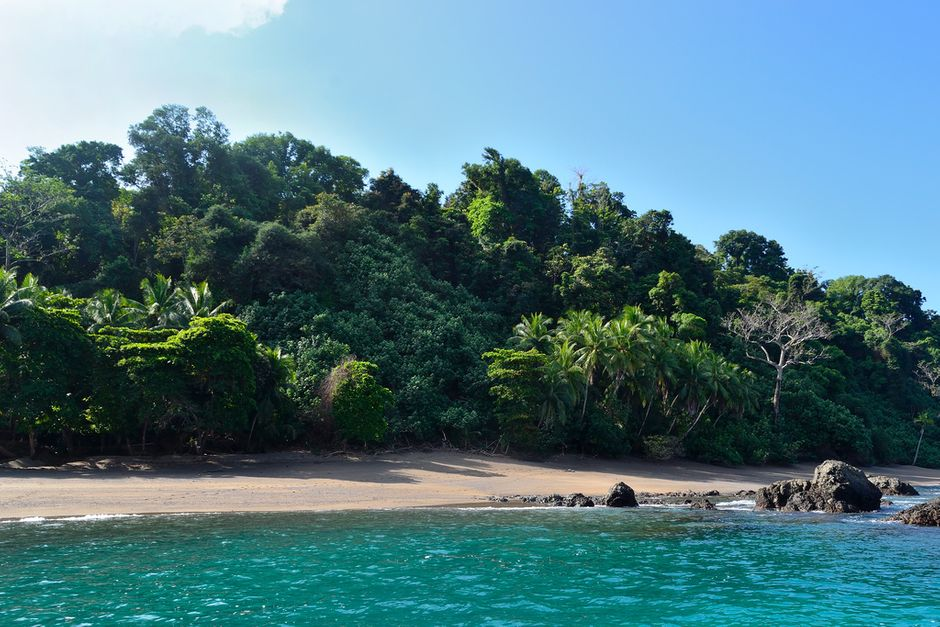 image of piece of beach in corcovado national park with dense forest behid