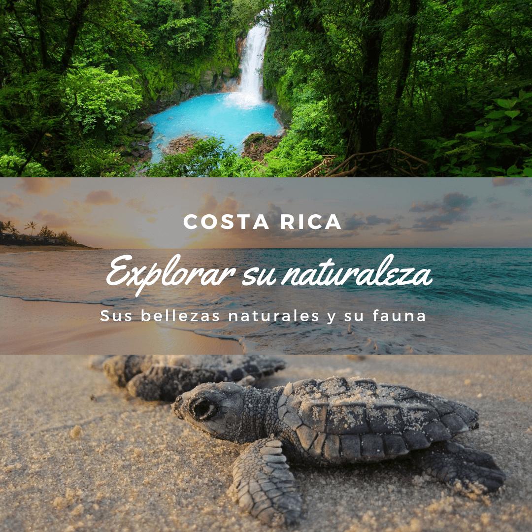 Costa Rica, destino seguro. Imagen de Rio Celeste y de unas tortugas bebes en la arena.