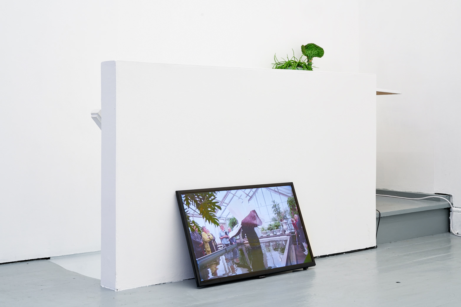 Becoming Plant, installation view