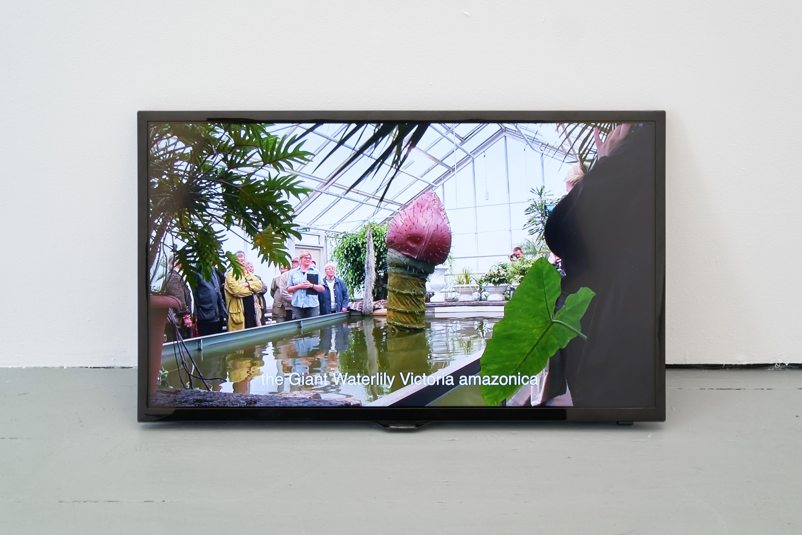 Ingela Ihrman, The Giant Water Lily Victoria amazonica BLOOMS, 2012, Documentation of a 2-night performance with waterlily costume, female host, pineapple fragrance
