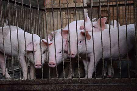 animal health monitoring, animal health and wellness, usda animal health, merck animal health, biomerieux animal health,