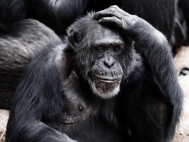 selfless ape