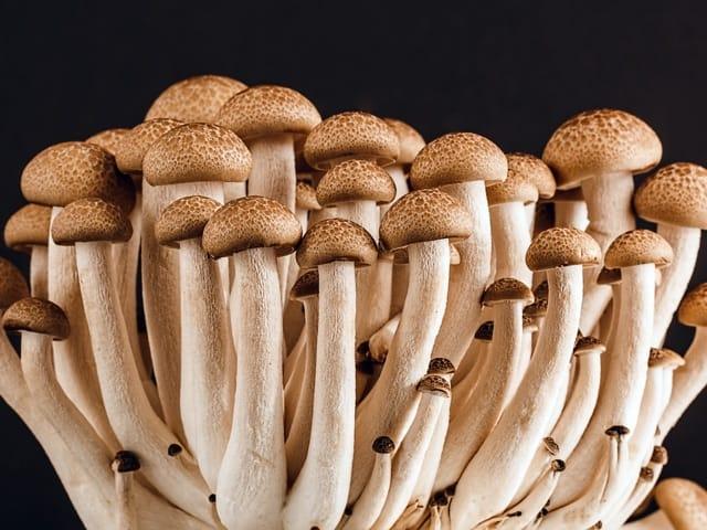 many mushroom