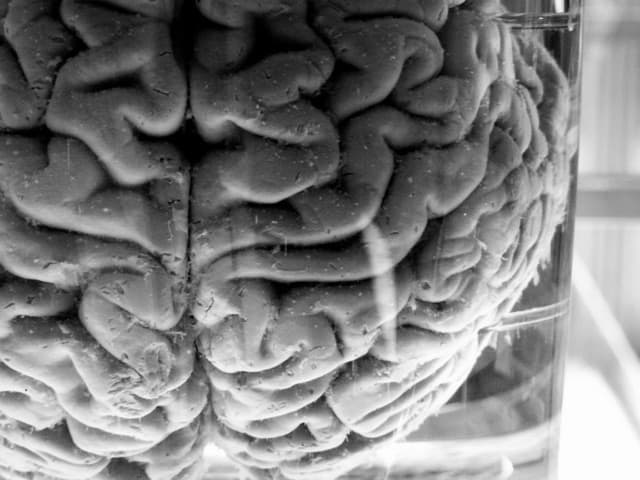 a brain in a vat