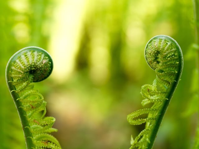 a virtuous fern