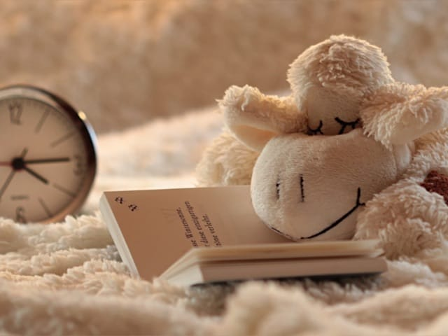 a sheep reading