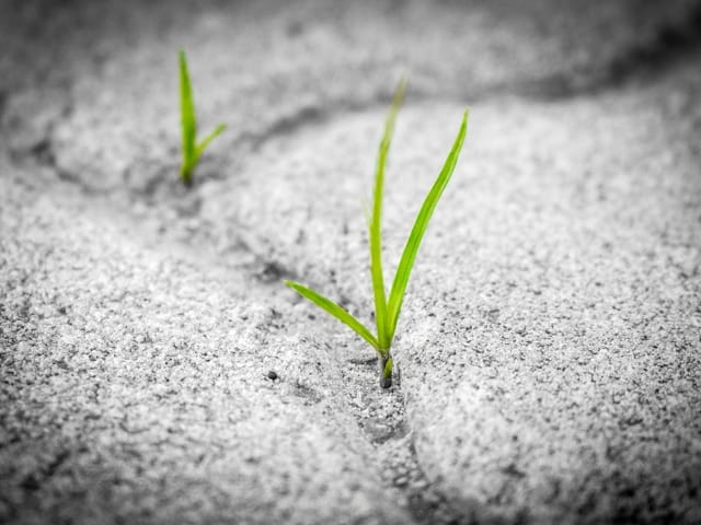 grass in the cracks
