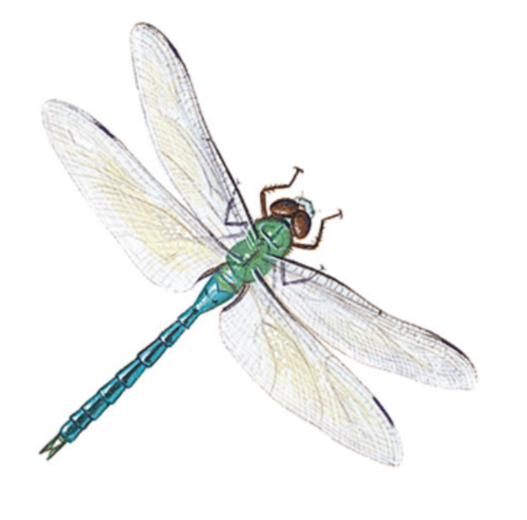 Is Your Business View Dragonfly?