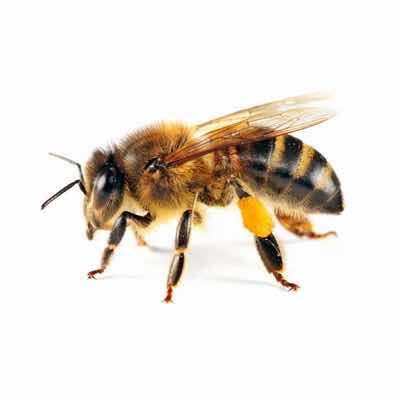 bee and wasp removal in mesa az