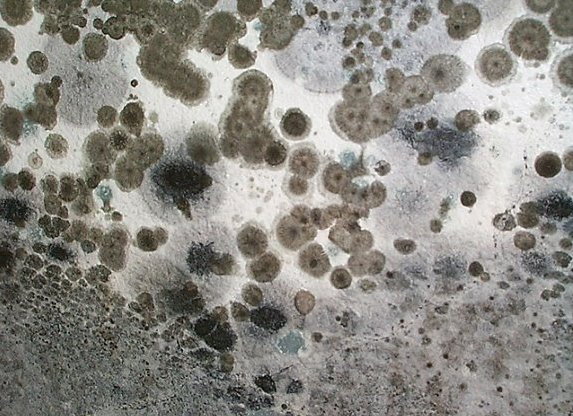 Is Mold Affecting You