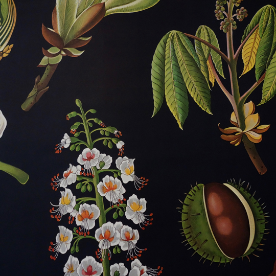 Botanical Wall Chart- Horse Chestnut