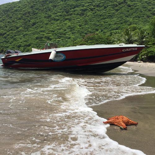 The beach St Lucia Caribbean