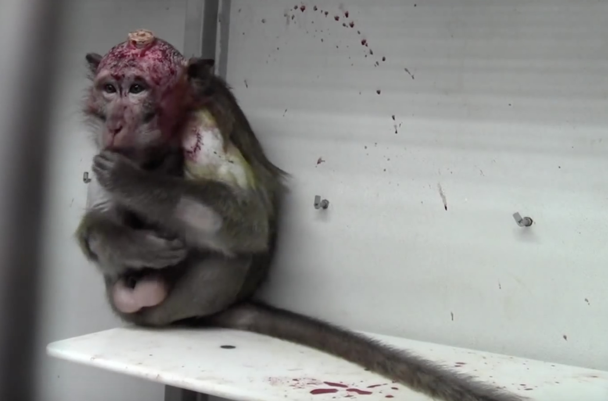 Monkey cruelty at Max Planck Institute for Biological Cybernetics
