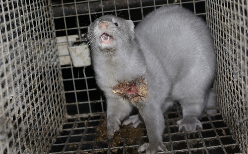 Fur Industry Cruelty
