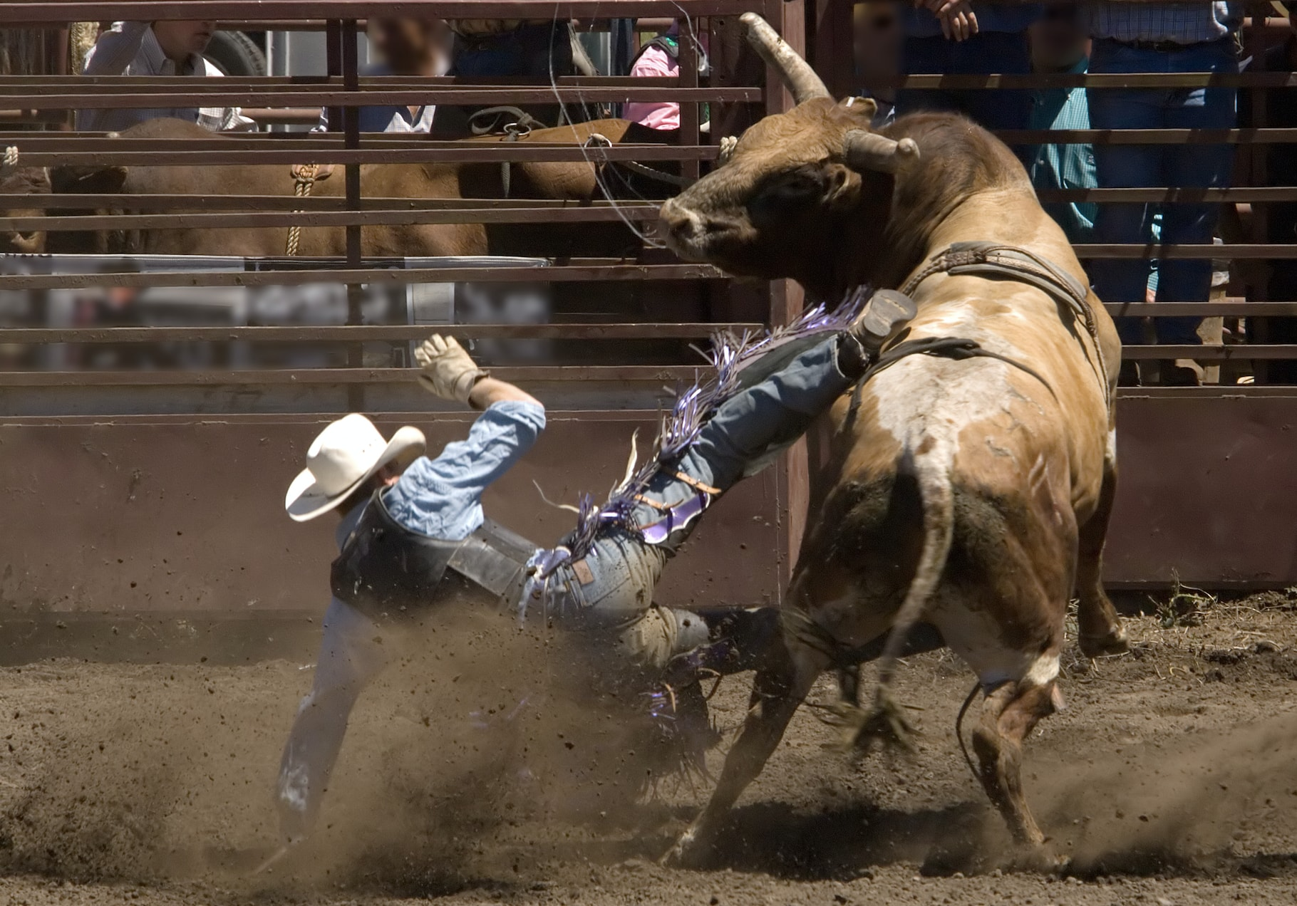 Cowboy Killed By Tormented Bull During Rodeo In Brazil