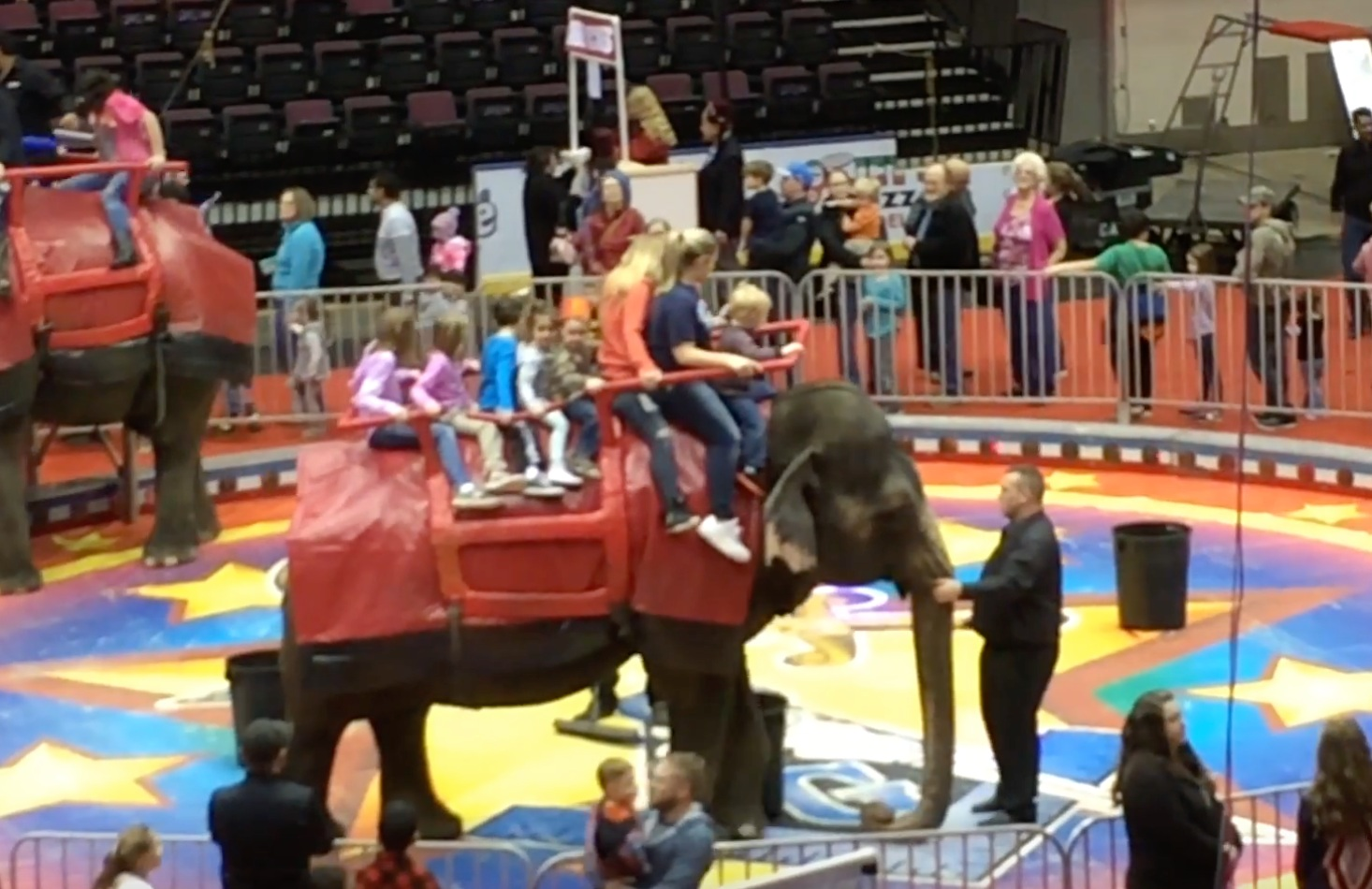 A circus elephant is forced to give people rides