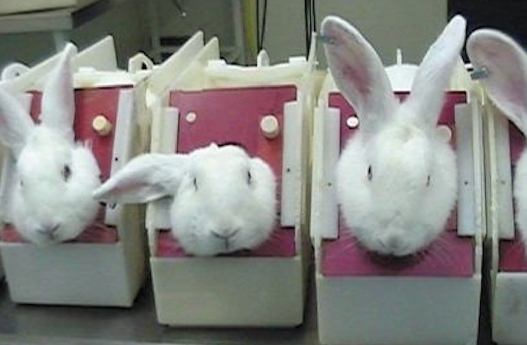 Animal Testing In California