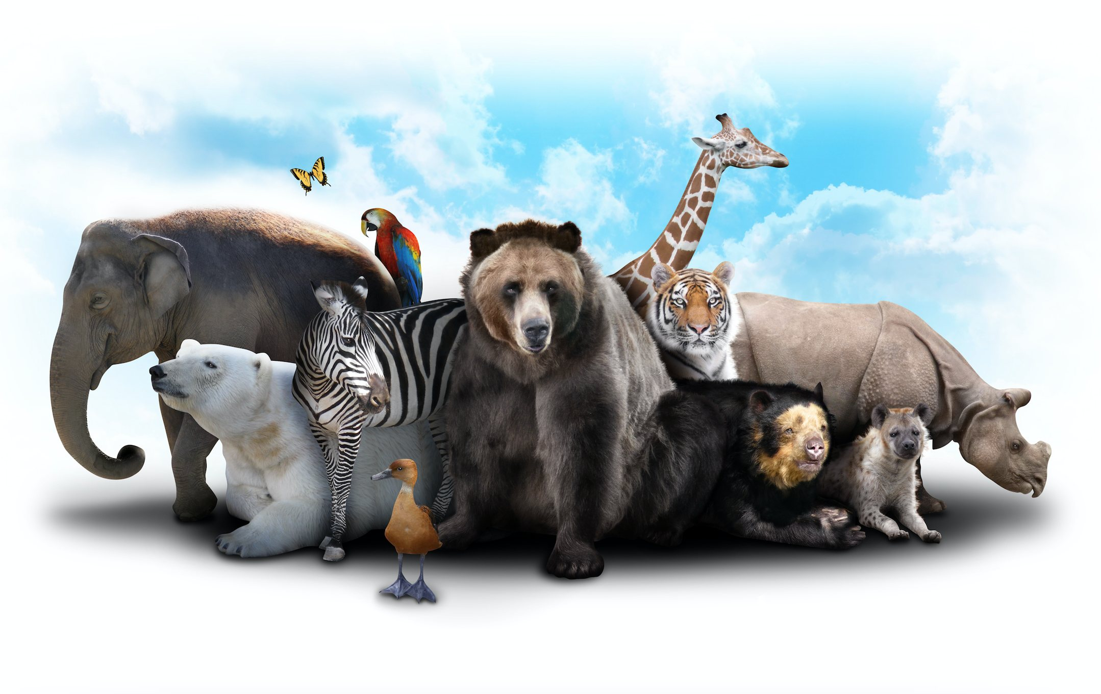A bear, giraffe, duck, polar bear, rhino, elephant, tiger, parrot, butterfly