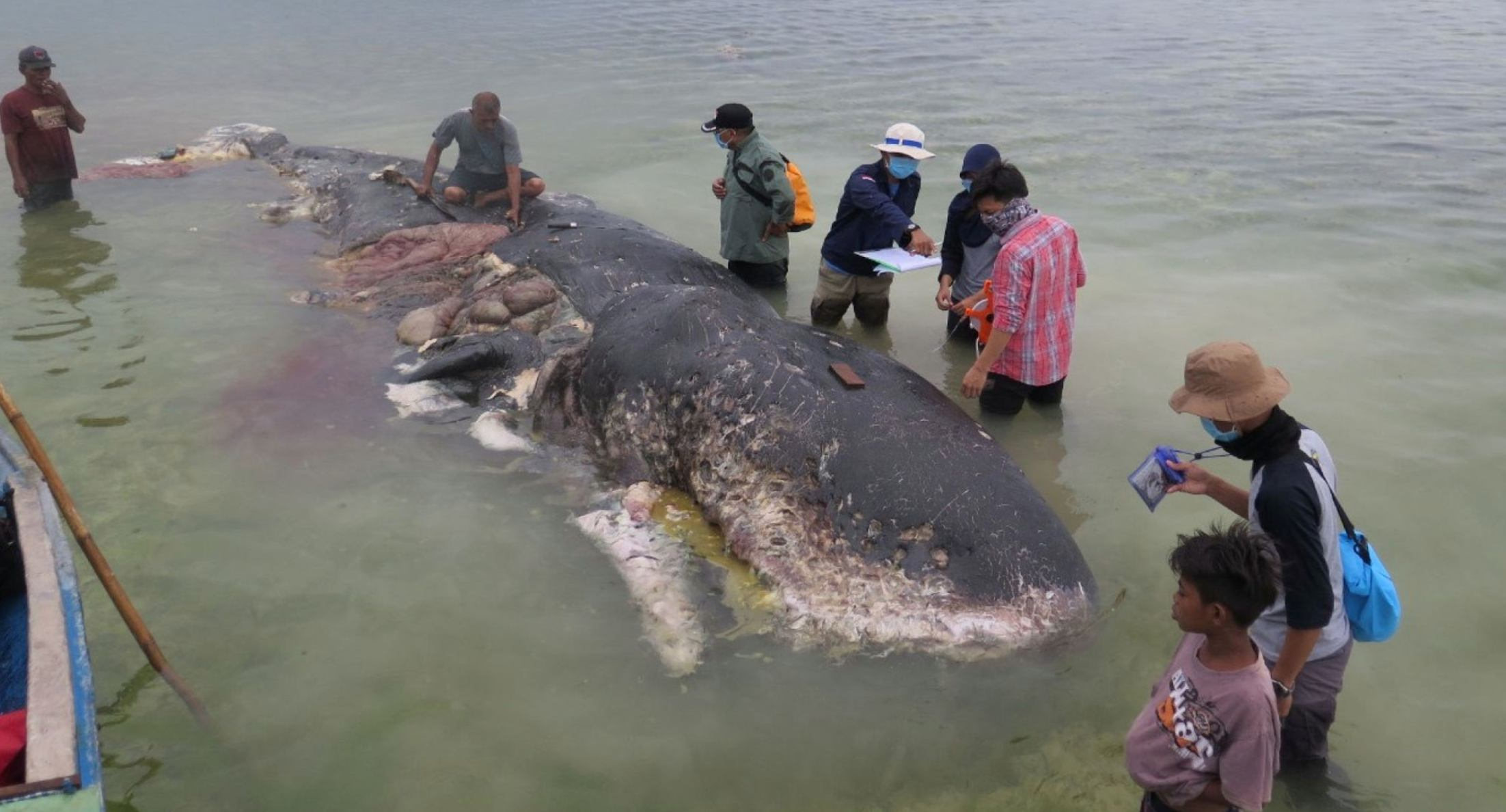 Dead whale washes up in Indonsesia with stomach full of plastic