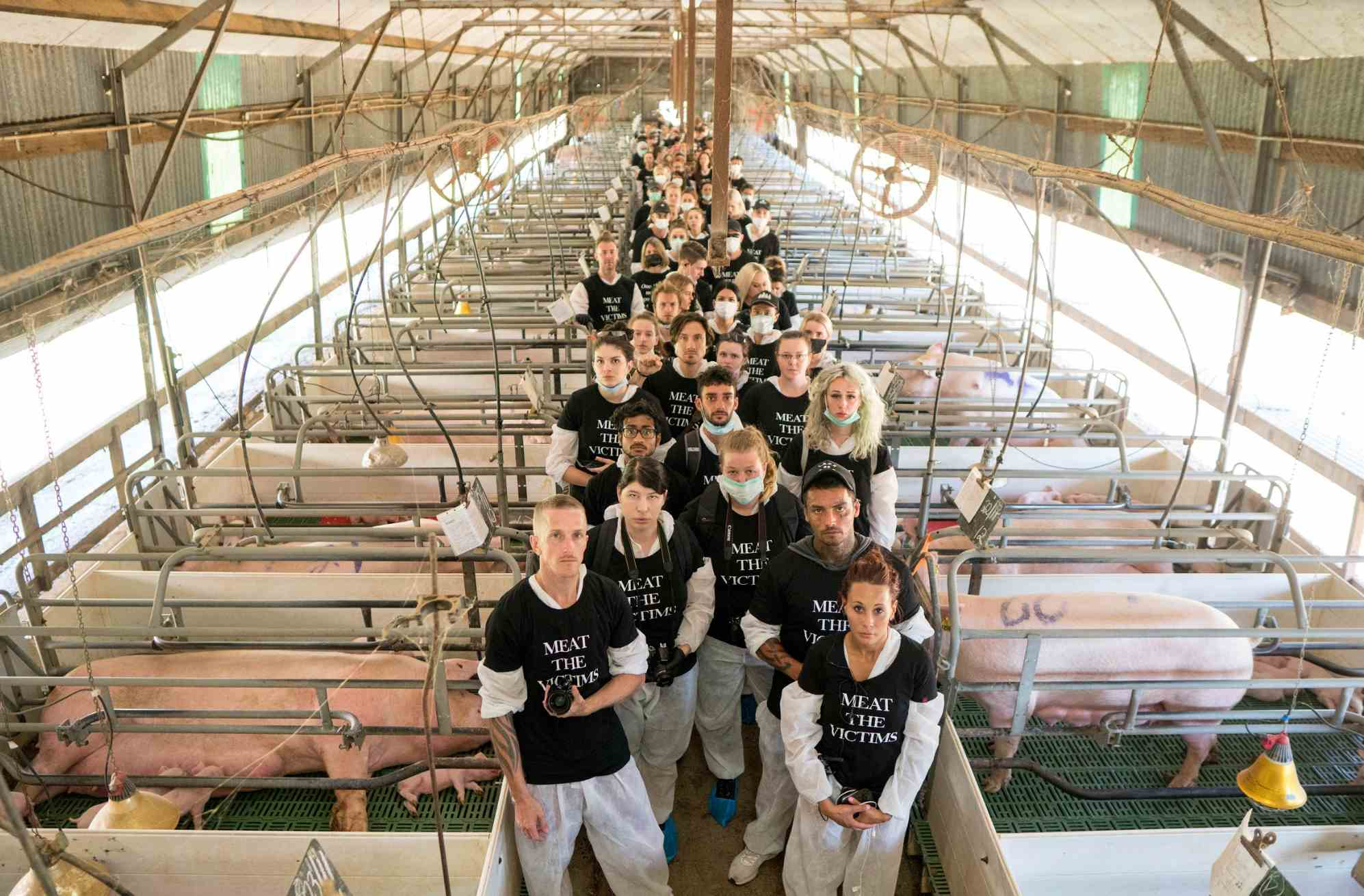 100 Animal Activists Lock Down Farm After Footage Shows 'Extreme Violence'