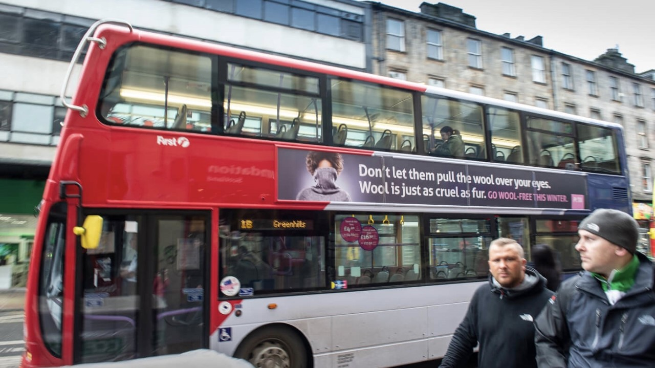 Anti-Wool Ad Hits Glasgow Following Investigation Into The Scottish Wool Industry