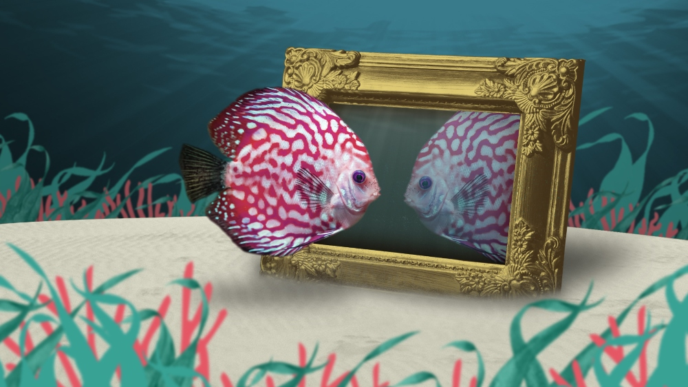 Fish looking in the mirror