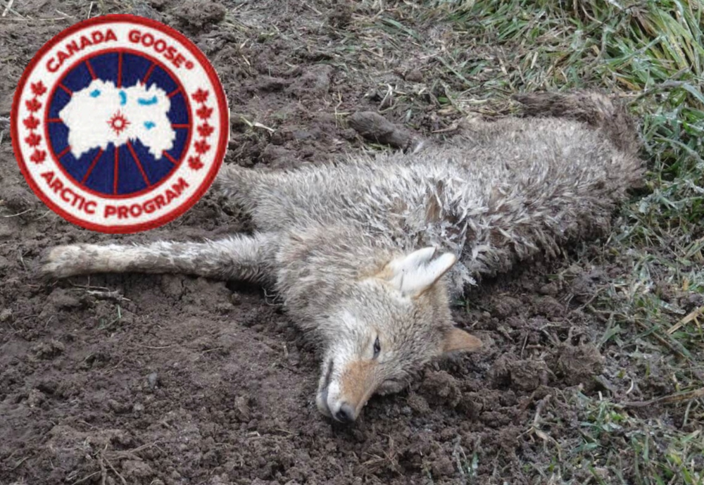 Canada Goose Reportedly Developing Faux Fur, Says Vegan Activist